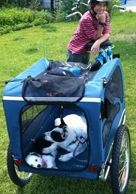 Top Bike Trailer For Dogs Reviewed Stroller Boards